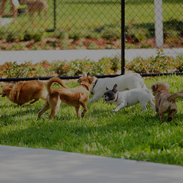 Large Dog Park at Solstice Apartments